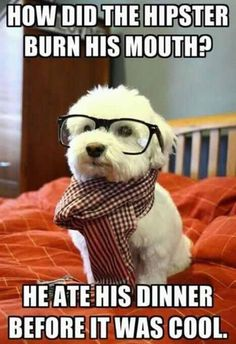 Hipster swag? haha all i know is this dog is crazy adorable and i would really like to cuddle with him.. right now.