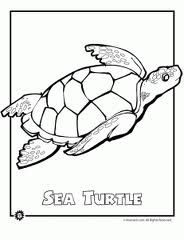 Google Image Result for http://www.animaljr.com/wp-content/uploads/2009/05/endangered-sea-turtle-231x300.gif