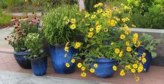 Container Flower Gardening Ideas: Creeping Jenny, Impatiens, Swallowtail Coleus This container gardening design is a great one for people who like a Outdoor Pots, Outdoor Gardens, Small Gardens, Outdoor Living, Container Gardening, Gardening Tips, Landscaping With Rocks, Garden Planters, Garden Gate