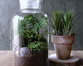 Vintage Style Moss Terrarium with Live Plants in Apothecary Jar