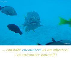 ... consider #encounters as an #objective ~ to #encounter yourself ! ( #Samara )