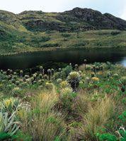 Laguna de origen glaciar en el santuario de flora y fauna de Iguaque, Boyacá.