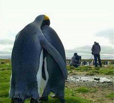 Quand tu as été recalé à l'audition de National Geographic