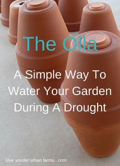 The Olla A Simple Way To Water Your Garden During A Drought | Blue Yonder Urban…