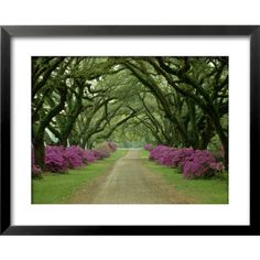 "art.com 31""W x 25""H Floral and Botanical Framed Art"