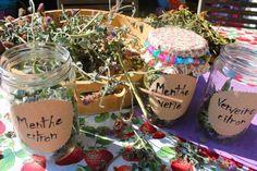 Faire ses tisanes soi même » croquelavieenrose.fr - La petite vie en rose d'Anouk, Maïa et Azia. Granita, Cocktails, Drinks, Herbalism, Detox, Medicine, Cooking, Brown, Health