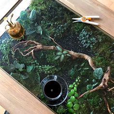Coffee table terrarium with satin pothos, Episcias and Pileas. Photograph: James… Coffee table terrarium with satin pothos, Episcias and Pileas. Coffee Table Terrarium, Decor Terrarium, Coffee Table Plants, Garden Coffee Table, Plant Table, Coffee Tables, Coffee Table Size, Indoor Garden, Indoor Plants
