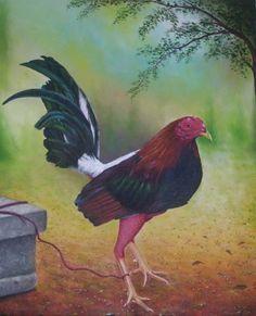 Gallo de Pelea Luis Antonio Jimenez Sanches