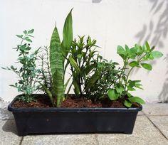 Vaso das 7 Ervas: Plantas e Significado Garden Plants, Container Gardening, Garden Decor, Vertical Garden, Bonsai, Houseplants, Succulents, Plants, House Plants Decor