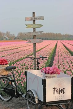 Welcome at our farm! We have the most beautiful range of tulips, dahlias and daffodils. Grab a coffe and enjoy our pictures on our website. Tulip Bulbs, Pink Tulips, Bulb Flowers, Old Farm, Flower Farm, Farm Gardens, Day Lilies, Future Travel, Amazing Flowers