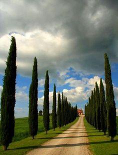 Tuscany                                                                                                                                                                                 Plus