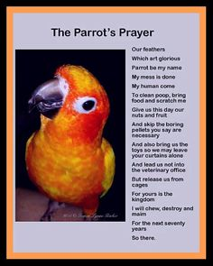 Parrot Prayer. This is so my Tango.