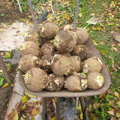 Mittleiderova metóda úzkych záhonov pre pestovanie zeleniny 2/3 - OZ Biosféra Sprouts, Flora, Stuffed Mushrooms, Gardening, Vegetables, Compost, Lawn And Garden, Stuff Mushrooms, Plants