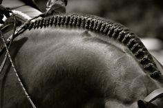 Horse braid picture