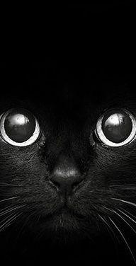 Black Cat~♛
