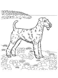 desene de colorat caine