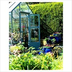 GAP Photos - Garden & Plant Picture Library - Painted greenhouse - GAP Photos - Specialising in horticultural photography