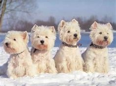 Oh my heavens!!! The cutest dogs ever!