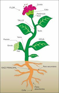 Blog de los niños: English Science- Plants.