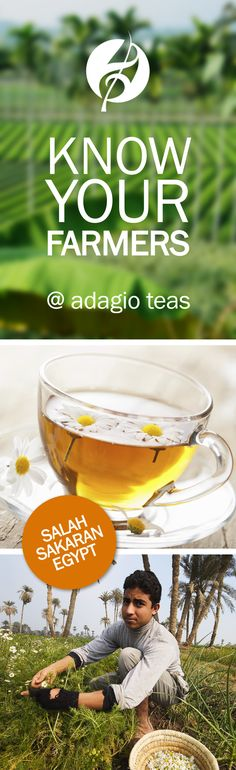 Our chamomile is grown & hand-harvested in Egypt.