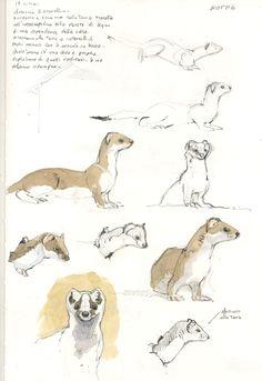 Federico Gemma - Wildlife Artist: Gli ermellini di casa