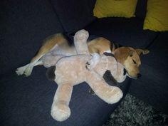 Koosje sleeping with friend