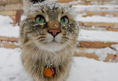 <b>Here are some cats looking majestic in the snow!</b> You're welcome.