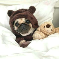 """""""I thought about it, and I'm sleeping in today."""" www.jointhepugs.com"""