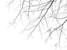 Branches PNG by simfonic on deviantART