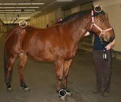 horse monitoring sensors - Google Search