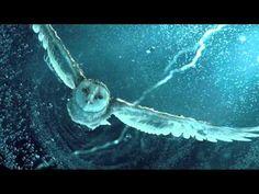 Owl Stone - Good Bye Theme - YouTube