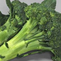 Fall for Broccoli - Grow it this fall, and you will enjoy the most tender and flavorful broccoli you've ever eaten
