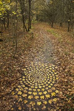 Autumn Leaves: Temporary works made using fallen leaves in Majority of creations made in Anston Stones Woods near Sheffield. Land Art, Ephemeral Art, Sculpture Art, Metal Sculptures, Abstract Sculpture, Bronze Sculpture, Installation Art, Art Installations, Outdoor Art