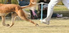 """FROM ShowSight - The Dog Show Magazine """"Neither of my dogs killed a shelter dog""""  --Shared to DESERT HEARTS Animal Compassion -  Phoenix, Arizona --3/12/2014 https://www.facebook.com/desertheartsphoenix"""