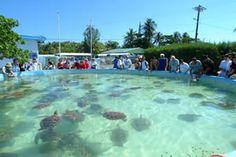 cayman island turtle farm | Cayman Turtle Farm in Grand Cayman, Grand Cayman, Cayman Islands ...Loved this trip with the kids!