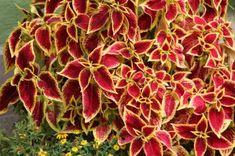 Bunt, Flowers, Plants, Composters, House Plants, Flora, Plant, Royal Icing Flowers, Flower