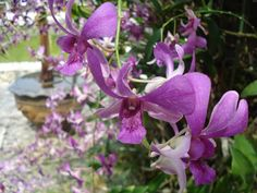 Orchid Flowers in Thailand