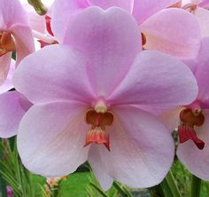 orchids grow wild in Bali
