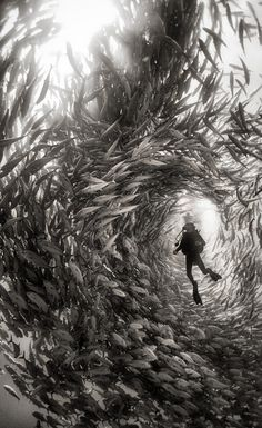 Plongez à la rencontre des créatures qui peuplent nos océans dans cette série de clichés à couper le souffle