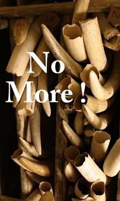 Save the Elephants...No More Ivory! ... Why kill a living, intelligent animal for something material? It makes no sense and is beyond cruel.
