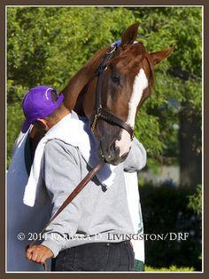 "Today's ""awwwwww"" moment from California Chrome and his buddy Willie.  Awwwwwww.  #BelmontStakes pic.twitter.com/fbFRu2Bof7"