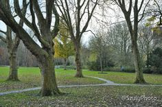#amsterdam #winter in the #beatrixpark. #licensed Amsterdam Winter, Plants, Photography, Fotografie, Photography Business, Photo Shoot, Plant, Fotografia, Photograph