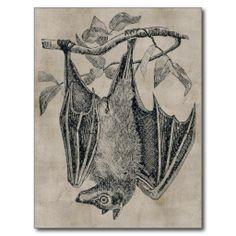 >>>Coupon Code          Vintage Bat Postcard           Vintage Bat Postcard online after you search a lot for where to buyReview          Vintage Bat Postcard Here a great deal...Cleck See More >>> http://www.zazzle.com/vintage_bat_postcard-239835283588680268?rf=238627982471231924&zbar=1&tc=terrest