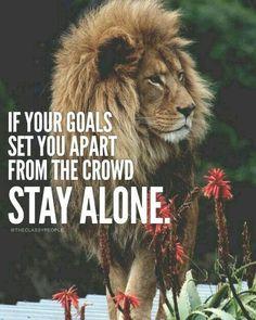 #Lion #TribeofJUDAH #HebrewIsrealites # GodsChosen. So called #africanAmerican #AfroBlacks #negroes