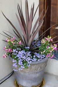 DIY cascading flower pot... 3 weeks after planting