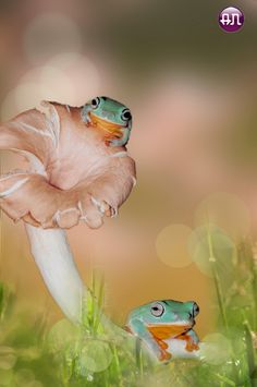 ~~be angry with each other... ~ frogs and fungi in the garden by AN HOANG~~