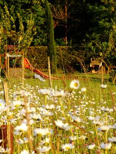 Daisies around the relay during #holidays #summer in the #vineyards of #Charente #France