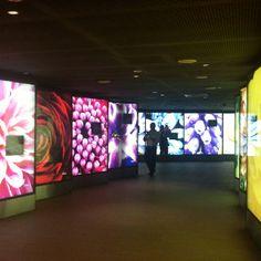 Flora tunnel