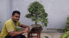 Bonsai tutorials for beginners how to reportting & Pruning tamarind bonsai trees Bonsai tutorials fo Bonsai Garden, Bonsai Trees, Bonsai Pruning, How To Grow Bonsai, Pruning Tools, Old Bricks, Deciduous Trees, Tamarind, Flower Beds
