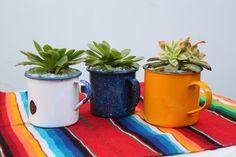 Colorful succulents #DIHWorkshop